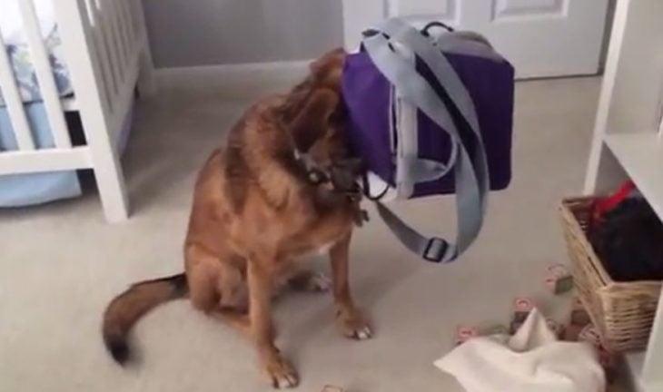 perro escondido en maletincito