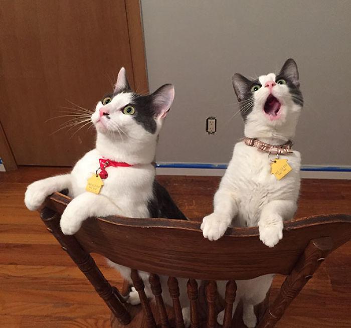 dos gatos sorprendiddos