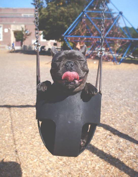 perro feliz en columpio