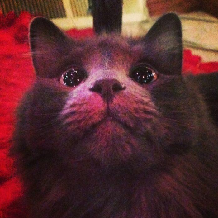 gato con ojos de asombro