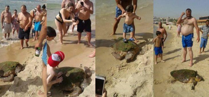 tortuga bañistas turistas selfie crueldad