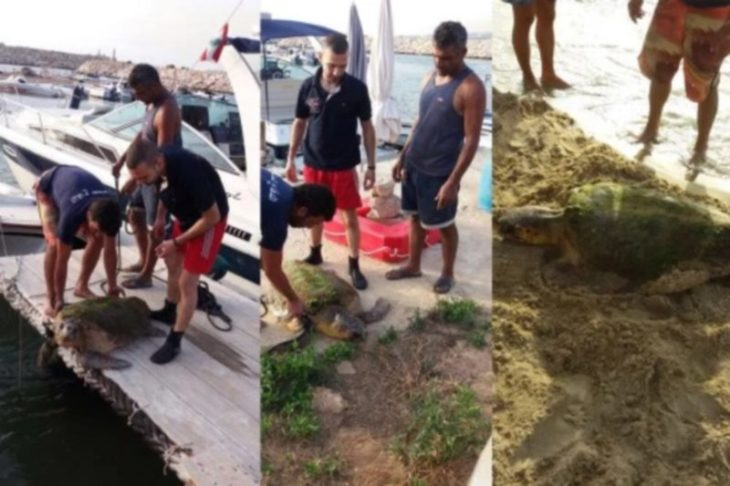 tortuga indefensa líbano animales
