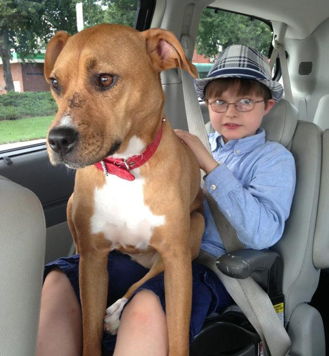 niño y perrita en el auto