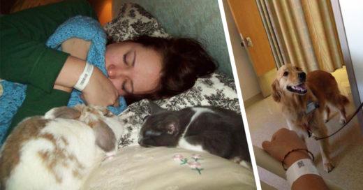Cover 14 mascotas que estuvieron con sus dueños en un momento difícil