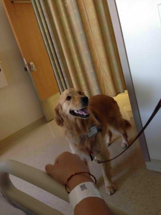 Perro terapia hospital