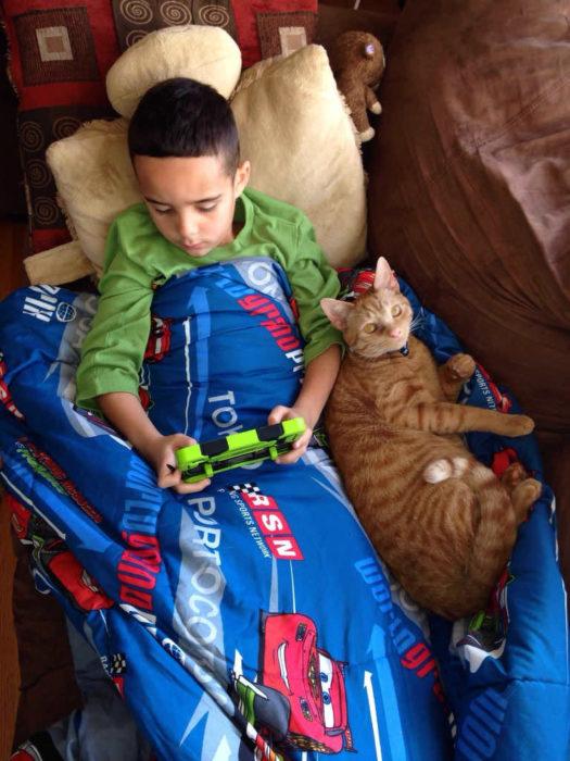 gato cuidando a un niño enfermo