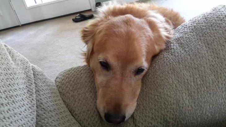 perro triste acostado en la pierna de su amo