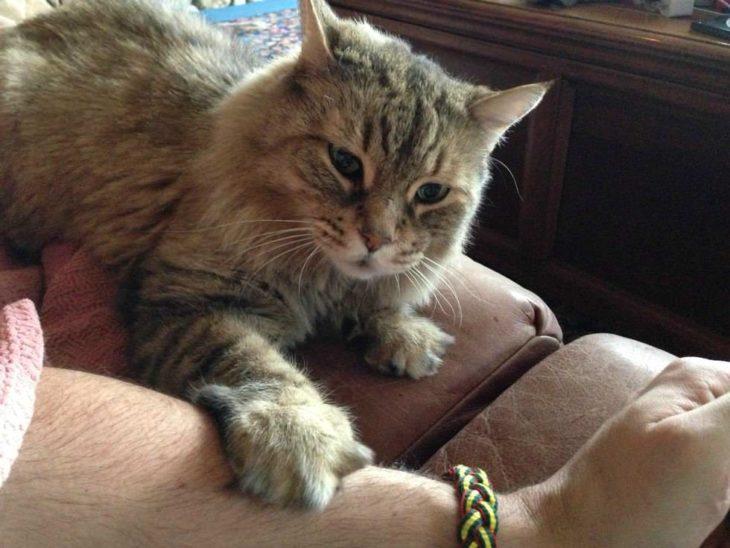 gato tocando a su dueña con la pata