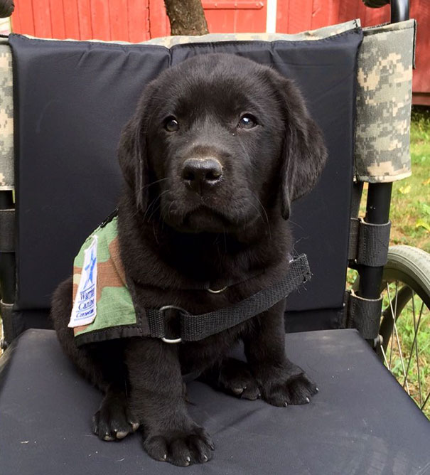 cachorrito de servicio negro
