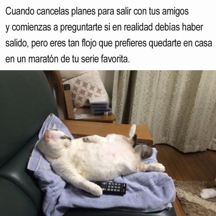 gato acostado con un control en una garra