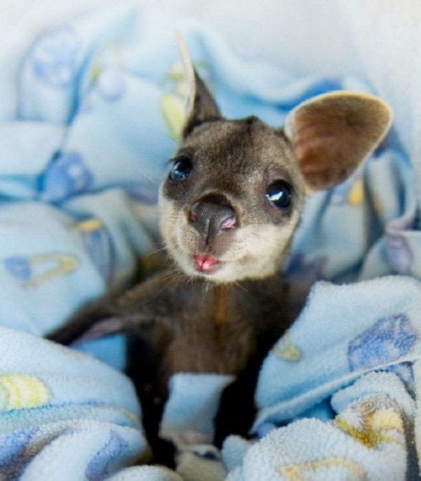 canguro bebe