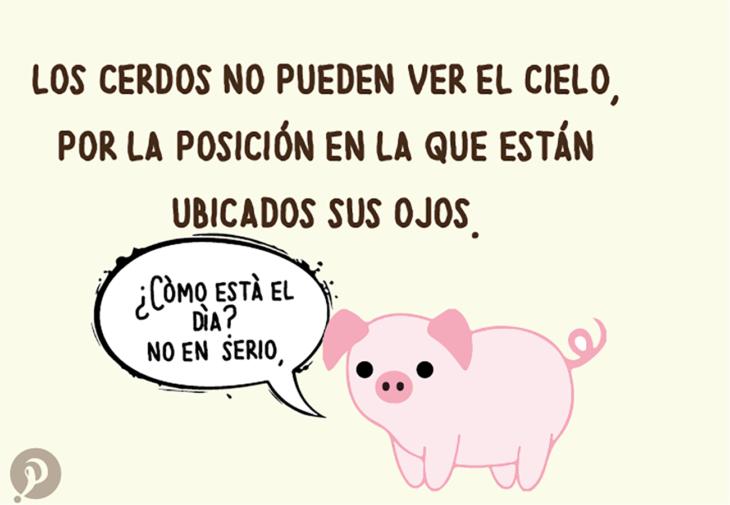 ilustración de un cerdo