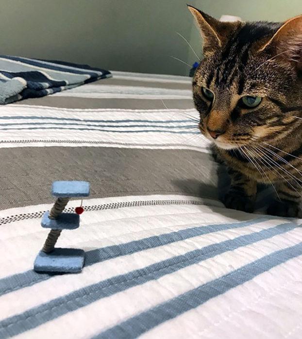 gato a un lado de juego de gato miniatura