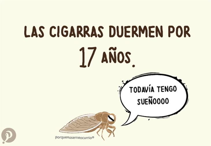 ilustración de una cigarra