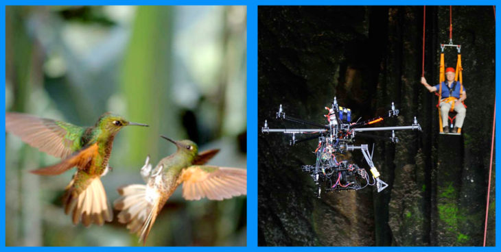 detrás de cámaras de la toma de dos colibríes