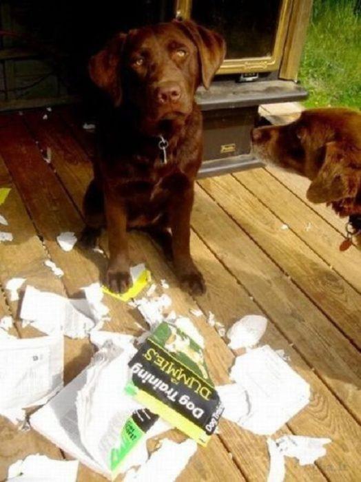 libro para perros tontos