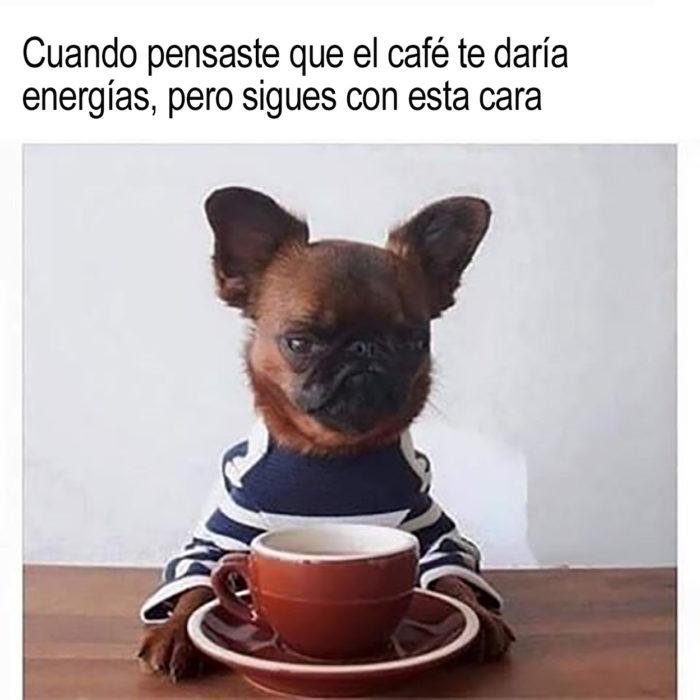 perrito y taza de café