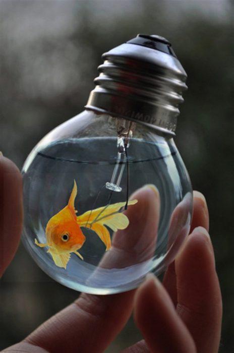 pez dorado en un foco