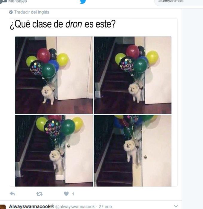 tuit en el queun perro está atado a unos globos