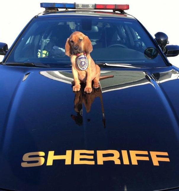 perrito policía encima de la patruya