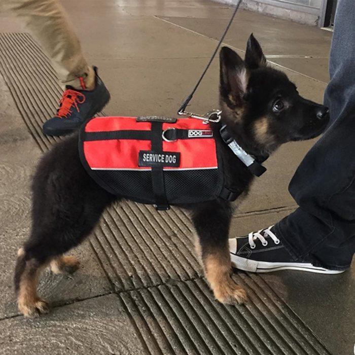 cachorro negro con chaleco rojo
