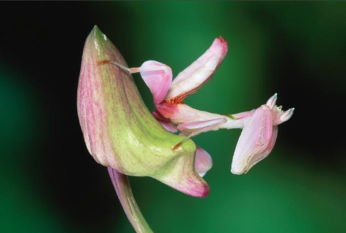 flores-asombrosas-1