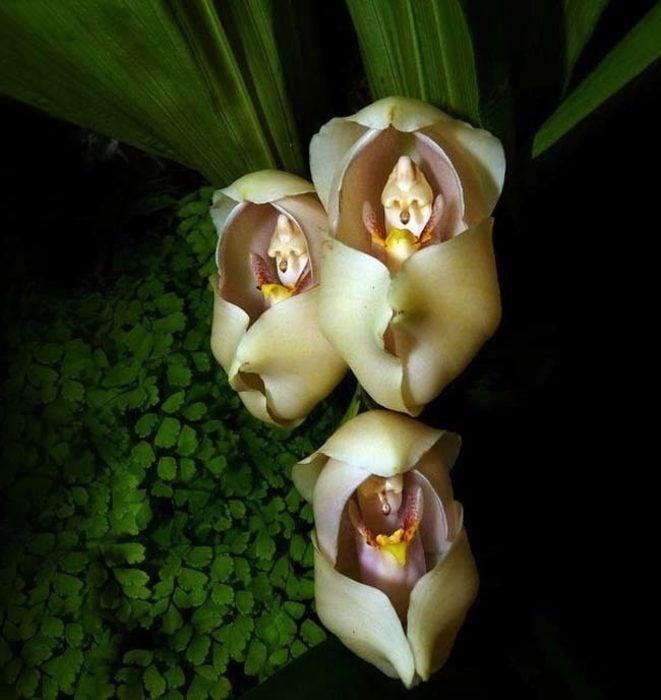 flores-asombrosas-3