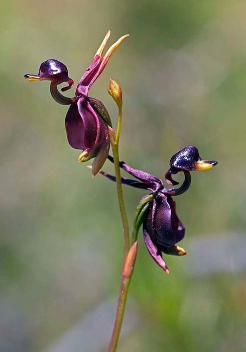 flores-asombrosas-5