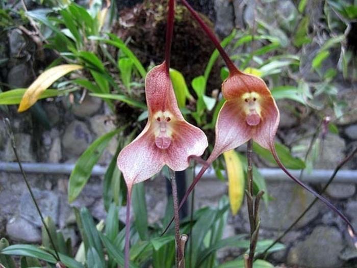 flores-asombrosas-9