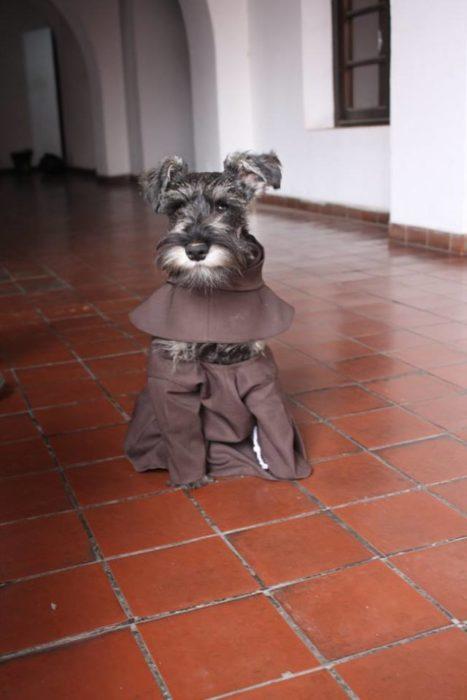 perrito con hábito de monje
