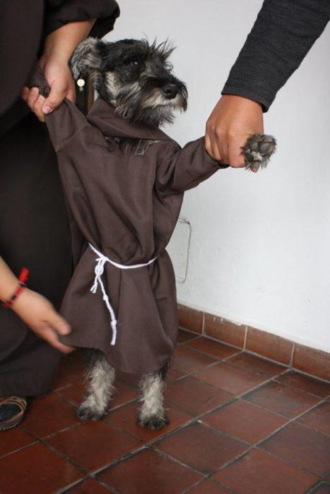 dos manos mostrando a un perrito con hábito de monje