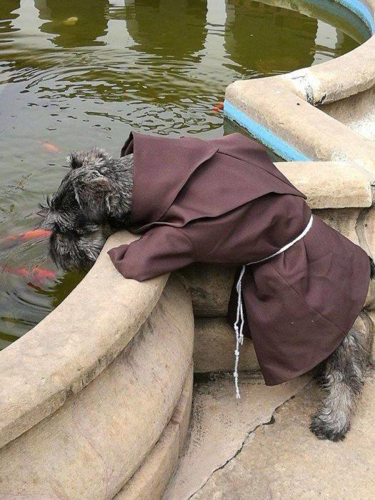 perrito vestido de fraile viendo a peces en una fuente