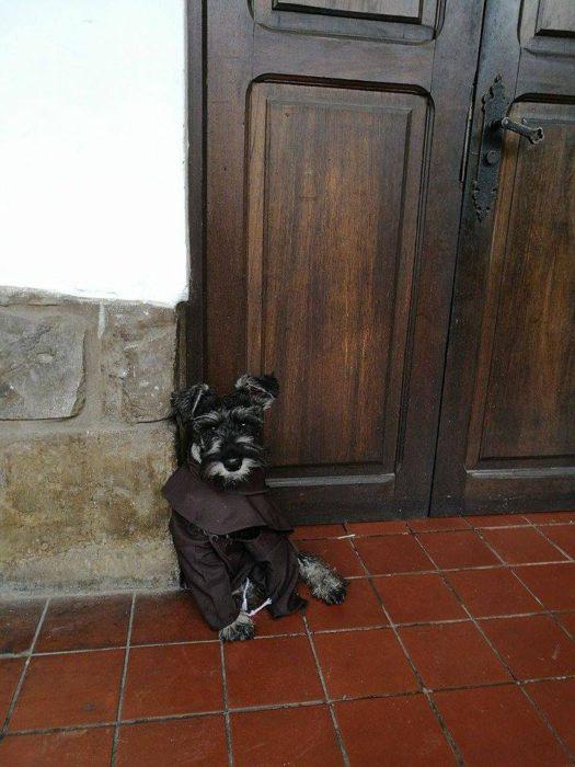 perrito vestido de monje frente a una puerta de madera