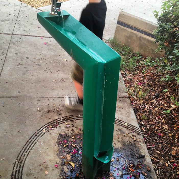 bebeder con compartimento para que los perros beban el agua que cae