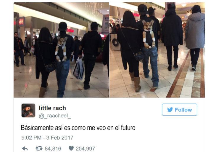 tuit de un muchacho que carga a un perro en una mochila