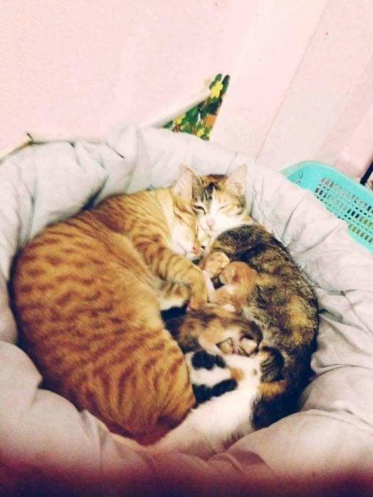 gatos familia gatitos recién nacidos