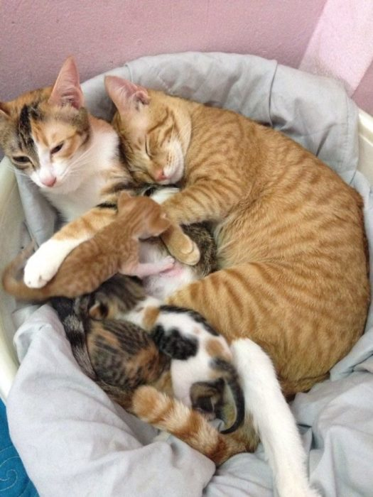 gato familia cachorros