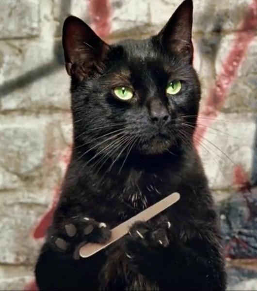gato negro limándose las uñas