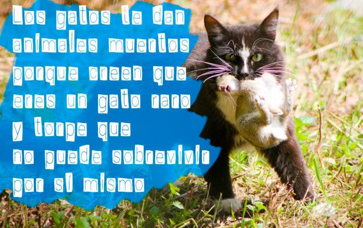 gato con un ratón en la boca