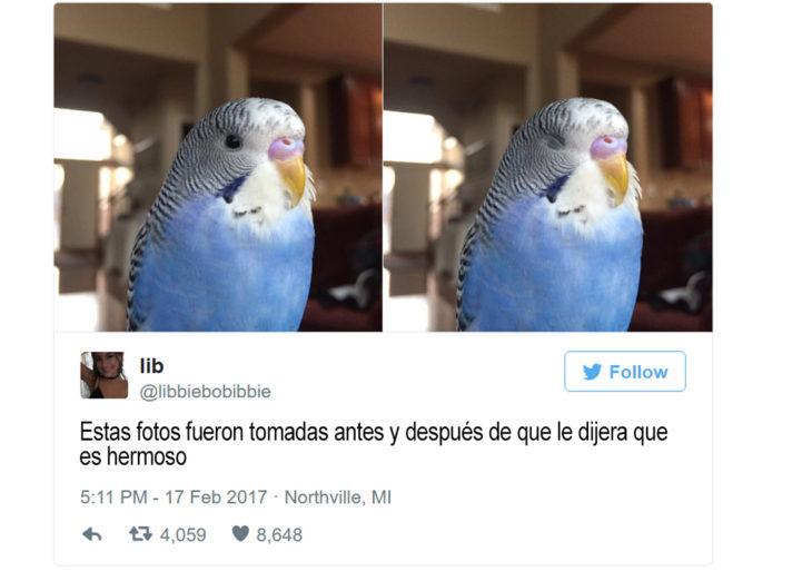 dos fotos de pájaro, en una tiene los ojos cerrados y en la otra abiertos