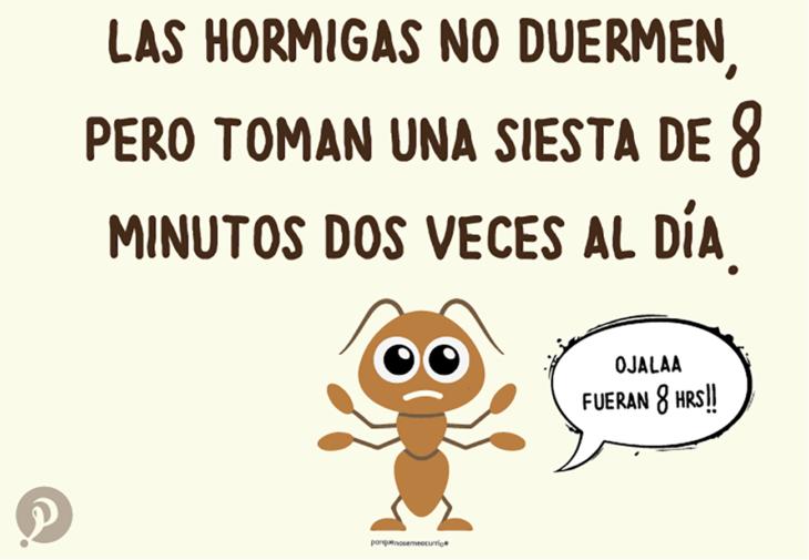 ilustración de una hormiga