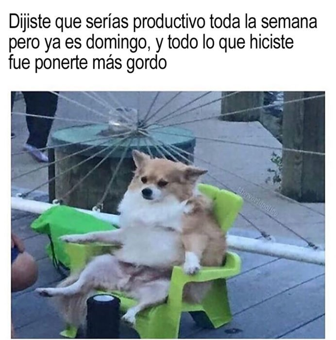 meme perrito sentado en una silla