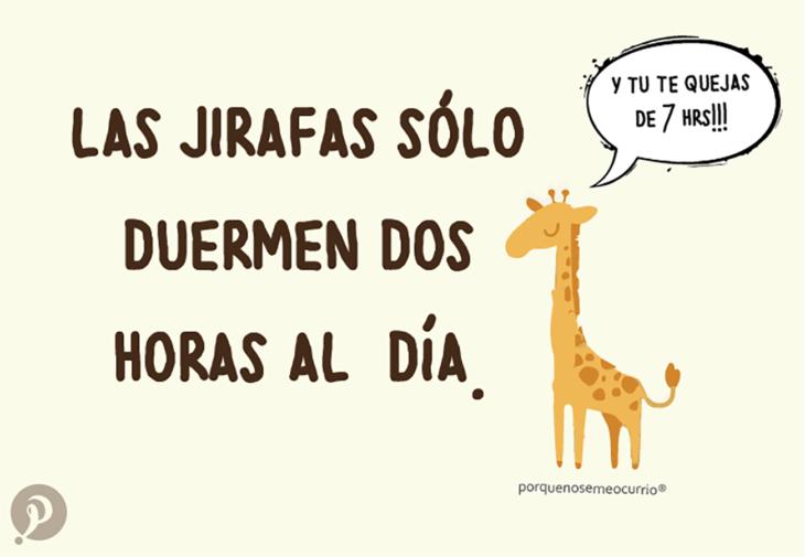 ilustración de una jirafa