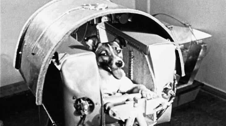 laika, el primer perro enviado al espacio