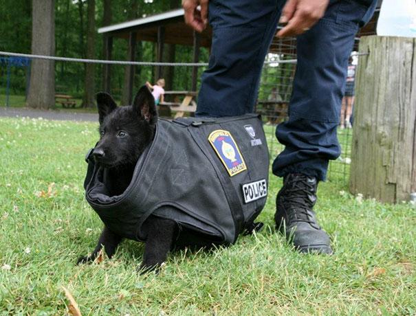 perrito policía en un chaleco demasiado grande