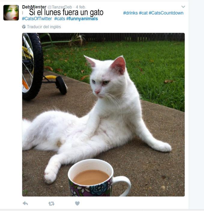 gato blanco al lado de una taza de café