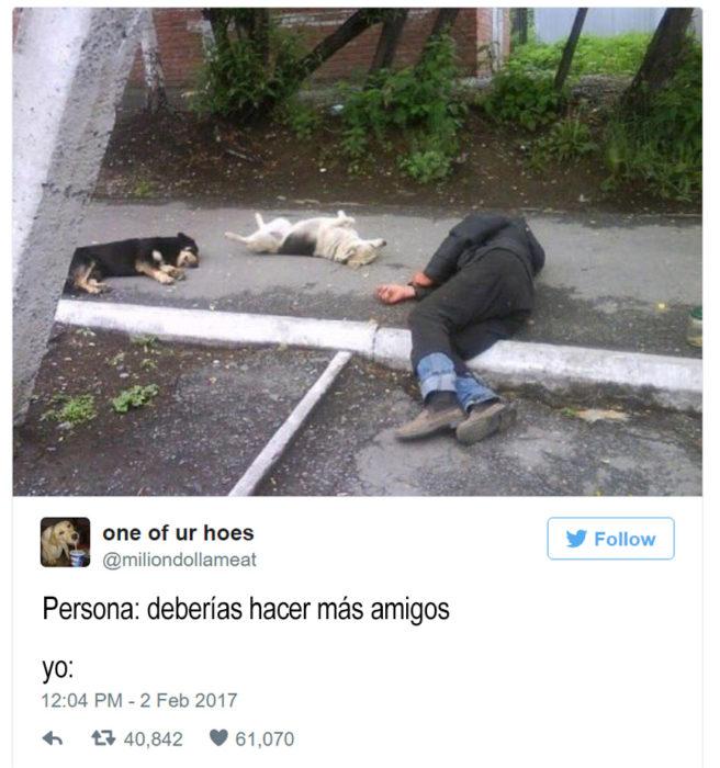 indigente recostado en la calle al lado de dos perros
