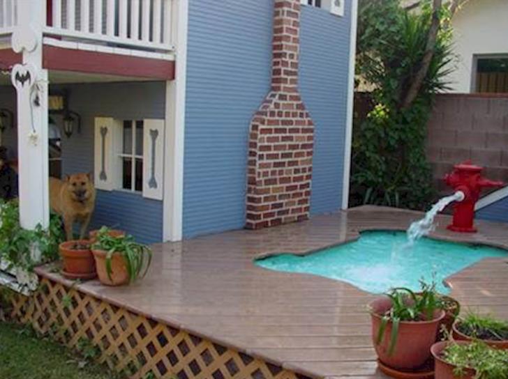 piscina para el perro