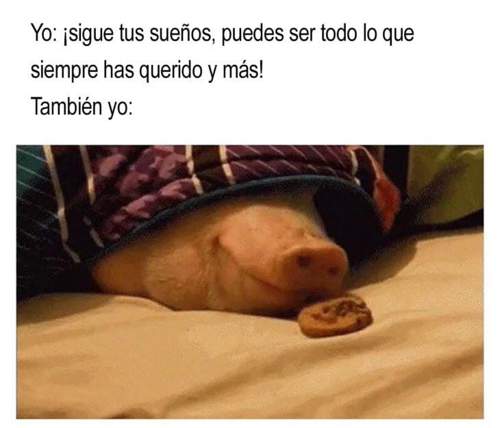meme cerdito en la cama con una galleta