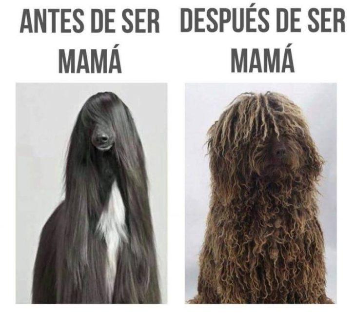 antes después de tener hijos perro cabello